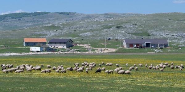 Smiljanic farm