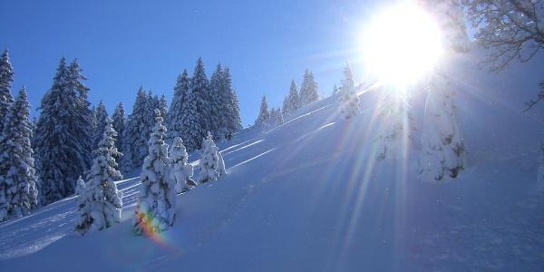 Schneeschuhwanderung Laber - Wintersonne und verschneiter Bergwald am Ettaler Manndl