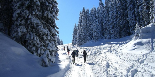 Skitour Laber - Aufstieg über die Forststraße zur Soila-Alm