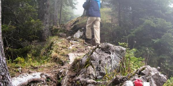 Weg durch den Nebelwald