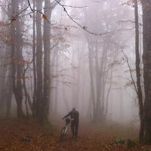 Im Belchenwald