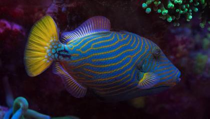 Das Unterwasserobservatorium in Eilat