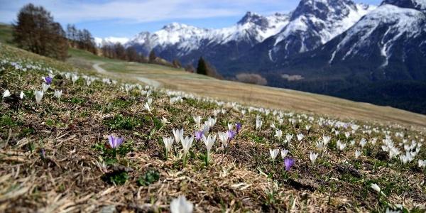 Frühling im Unterengadin