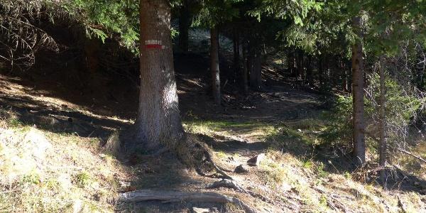 Beim Aufstieg, Beginn des Waldweges