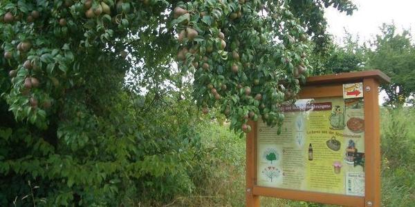 Obstbaum am Wegrand