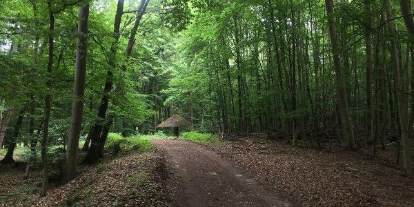 Jüngersdorfer Wald