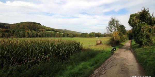 Weserhöhen_Beverradweg_zwischen_Beverungen_und_Dalhausen