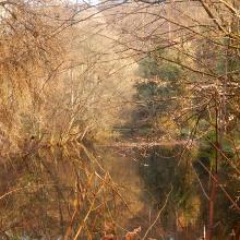 Fischteich oberhalb der HiererMühle