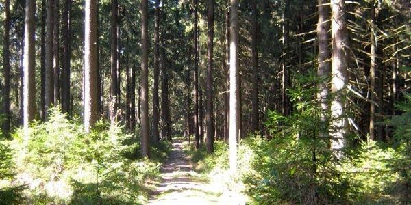 Wege durch den Hochwald