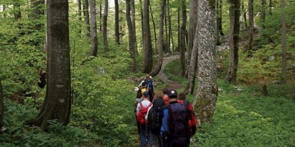 Put kroz šumu na Risnjaku