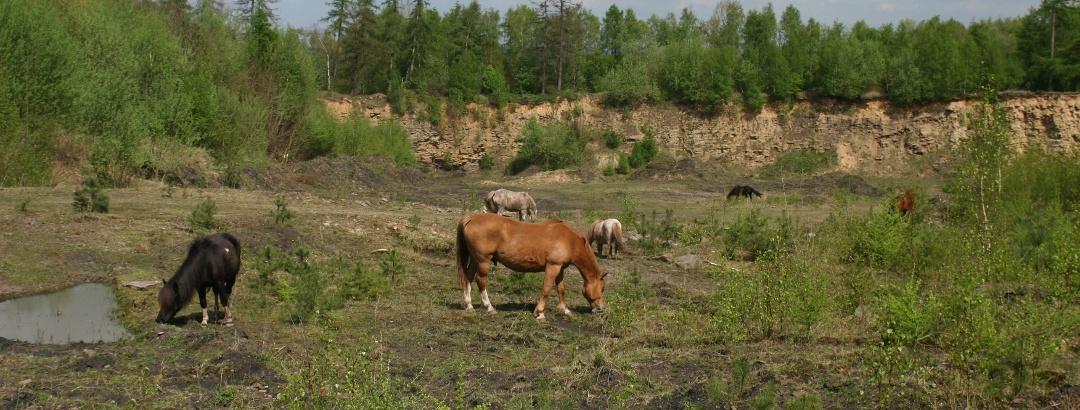 Naturerlebnispfad Alter Steinbruch Liekwegen