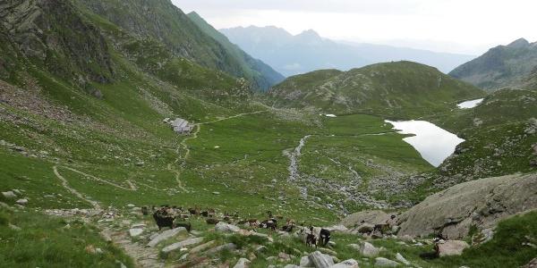 Pfad oberhalb der Oberkaser Hütte