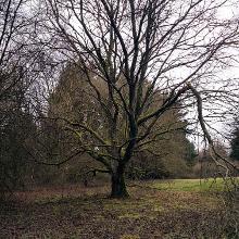 Beeindruckender Baum am Weg