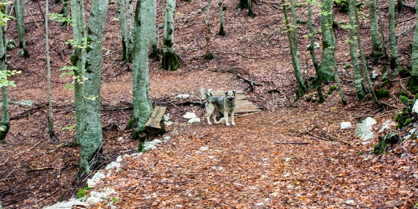 Vom Nationalparkzentrum Ivanova Korita gehen wir in den Wald, nach der Teerstraße links rein