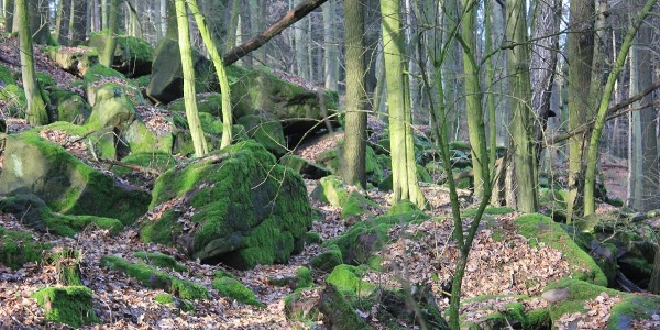 Blockschutt an der Nordseite des Kleinen Bergs Hohburg