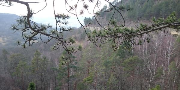 Saalehorizontale Blick Richtung Jena