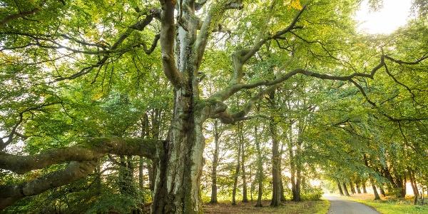 La forêt infinie Rodt