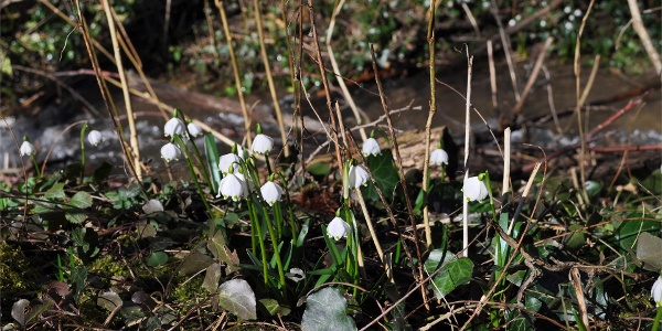 Frühlingstal