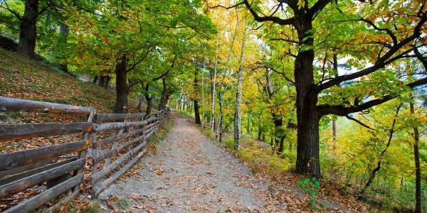 Sentiero delle castagne