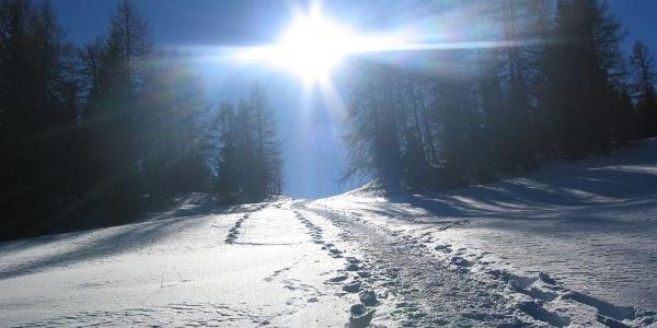 Snowshoeing in Meltina
