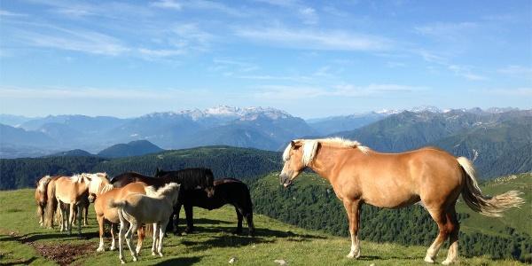 Pascolo alpino Monte Luco