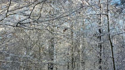 Reizvolle Winterlandschaft oberhalb von Neckarsulm