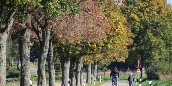 Radfahrer auf dem Radweg BauernLand Weser