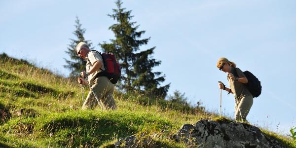 Einstieg zur Drei-Seen-Tour - über Almwiesen geht es gemütlich bergauf