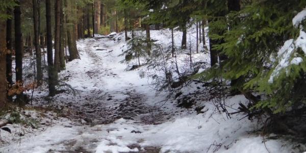 Waldpfad nach Elisabethszell