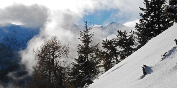 Im lichten Wald oberhalb der Jaurishütte
