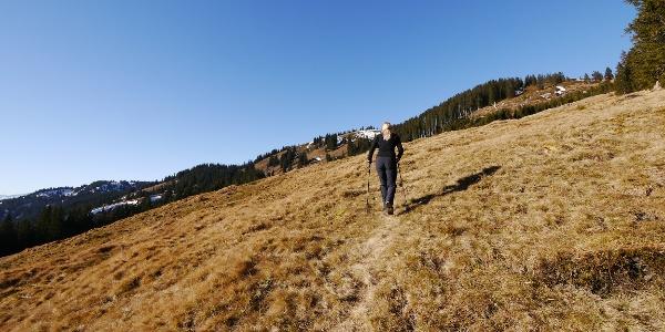 Über Wiesenpfade Richtung Gipfel des Wertacher Hörnle