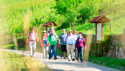 Wandern im Weinberg_Kraichgau_Stromberg_Fotostate_Jan_Bürgermeister