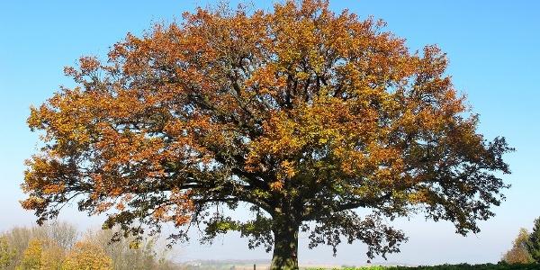 Die Bildereiche im Herbst