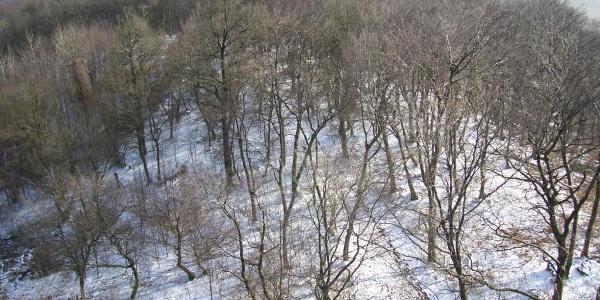 Aussicht im Winter vom Luisenturm Borgholzhausen