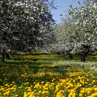 Baden Württemberg im Frühling