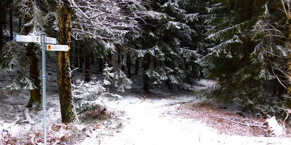 Endpunkt im Binger Wald