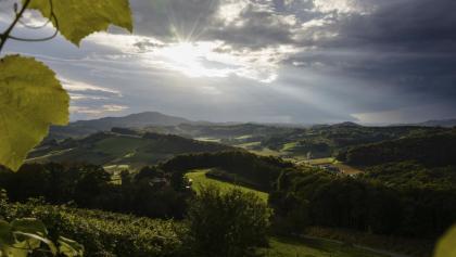 Blick ins Weinland bei Fehring