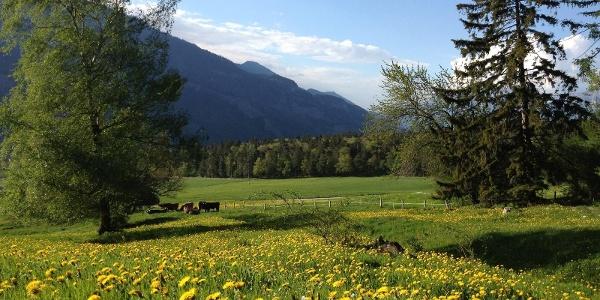 Fürstenwald oberhalb Chur