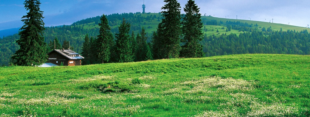 Blick auf den Feldberg