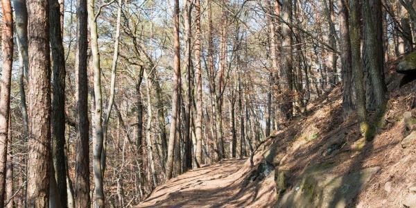 Durch (noch) lichtdurchfluteten Wald