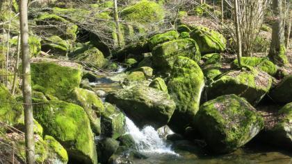 Moosbewachsene Granitfelsen im Gießenbach
