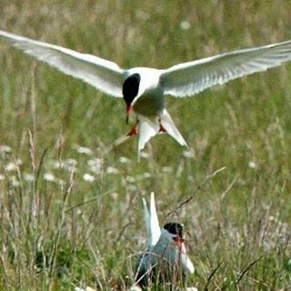 Rikt fågelliv vid Krankesjön