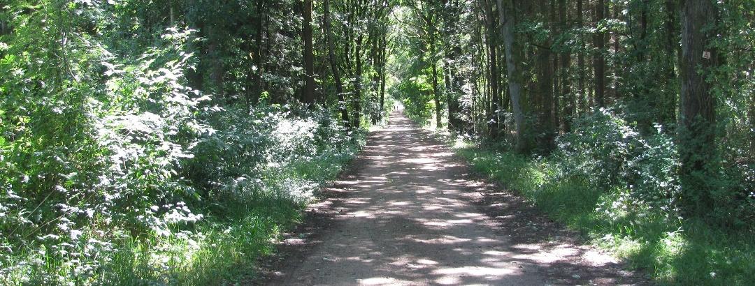 Im Wietzendorfer Moor