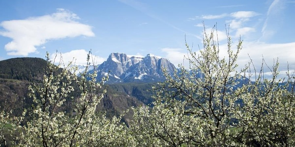 Flowering plum trees with views