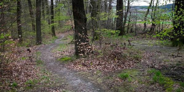 Flowiger Trail am Süllberg zw. Linderte und Bennigsen bei km 6