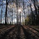 Die Sonne sinkt im Wald nahe Flammersfeld