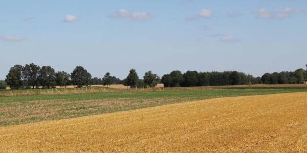 Felder bei Wohlde