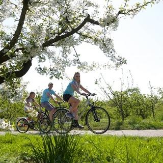 Radeln im Kirschblütenzauber