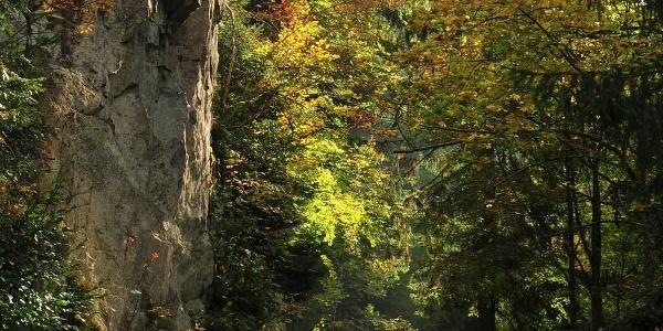 Bannwald Schwarzahalden