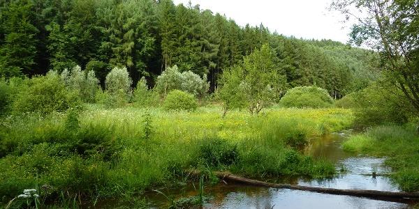 Idyllisch fließt die Moosalbe durch ein grünes Tal.